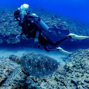 【感動!】サイパンでダイビングして、ウミガメと泳いだよ!!