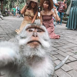 【おサルとセルフィー!】バリのモンキーフォレストでお猿さんと写真を撮ってきた話。